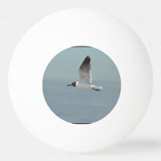 Laughing Gull Ping-Pong Ball
