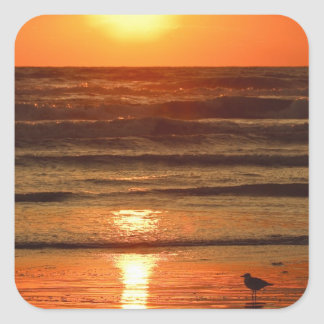 Laughing Gull Larus atricilla) silhouetted Square Sticker