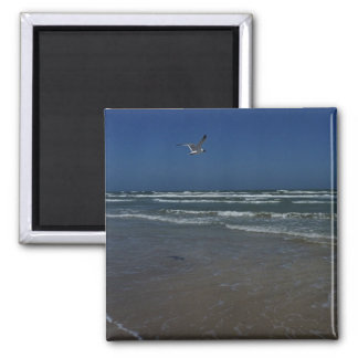 Laughing Gull Magnets