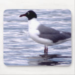 Laughing Gull Mouse Pad