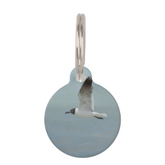 Laughing Gull Pet Name Tags