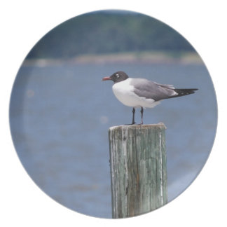 Laughing Gull Plates