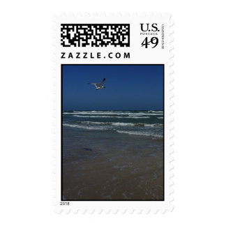 Laughing Gull Stamps