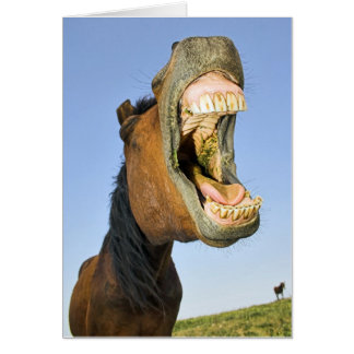 Laughing Horse Birthday Card