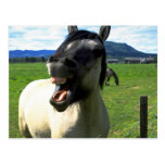 Laughing horse postcard