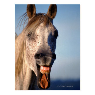 laughing horse postcards
