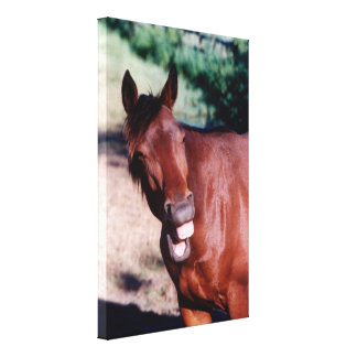 Laughing horse Stretched Canvas Print