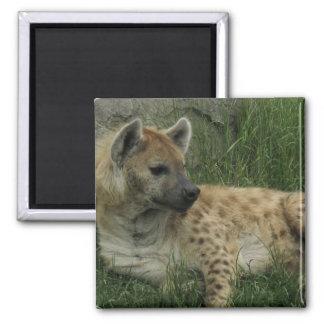 Laughing Hyenas Magnet