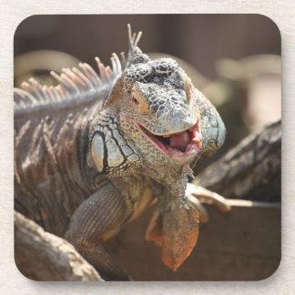 Laughing Iguana Photography Drink Coaster