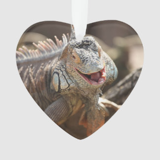 Laughing Iguana Photography Ornament