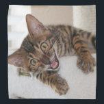 """LAUGHING KITTEN BANDANA<br><div class=""""desc"""">A photo of a cute Bengal kitten having a crazy good laugh.</div>"""