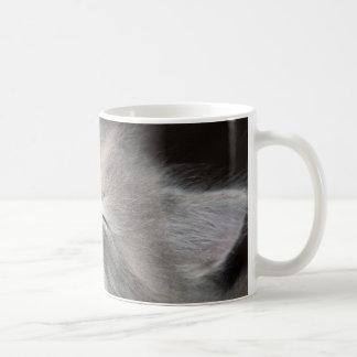 laughing kitten mug