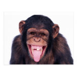 Laughing Monkey Postcard