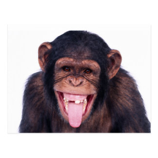 Laughing Monkey Postcard