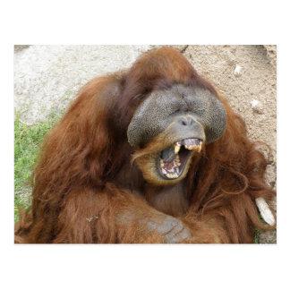 Laughing Orangutan Postcard