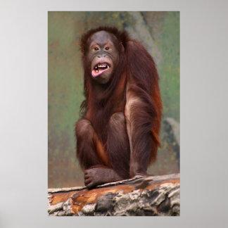 Laughing Orangutan Print