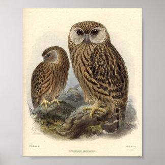 Laughing Owl Print