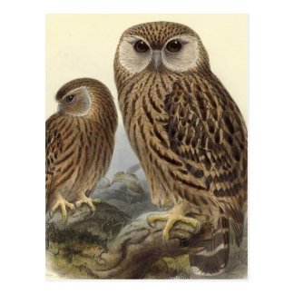 Laughing Owl Vintage Illustration Postcard