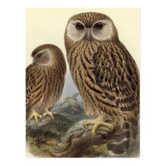 Laughing Owl Vintage Illustration Postcard