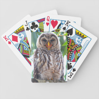 Laughing Owlet Card Deck