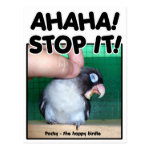 Laughing Pocky cute lovebird Post Card