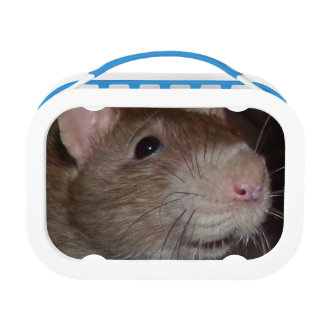 laughing rat lunch box