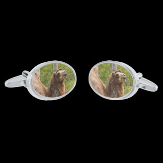 Laughing Smiling Camel Nature Photo Cufflinks
