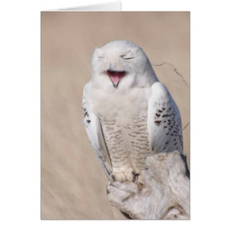Laughing Snowy Owl Card