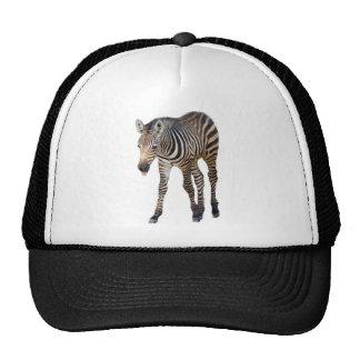 Laughing Zebra Trucker Hat