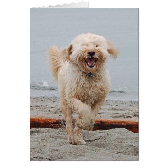 laughingchuck card