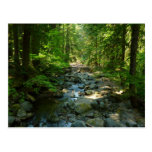 Laughingwater Creek at Mount Rainier National Park Postcard