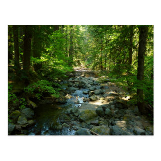 Laughingwater Creek at Mount Rainier National Park Postcard
