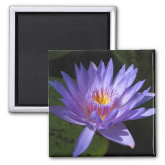 Laura Frase 2 Inch Square Magnet