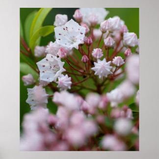 Laurel de montaña de Pennsylvania Póster