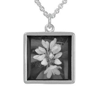 Laurel de montaña del rododendro en blanco y negro colgante cuadrado