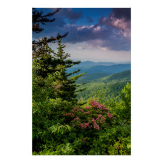 Laurel de montaña en la salida del sol posters