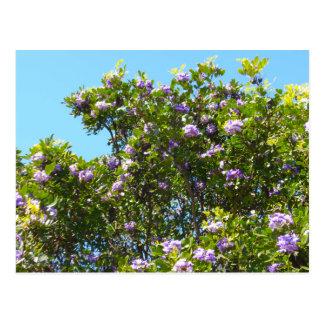 Laurel de montaña en primavera postales