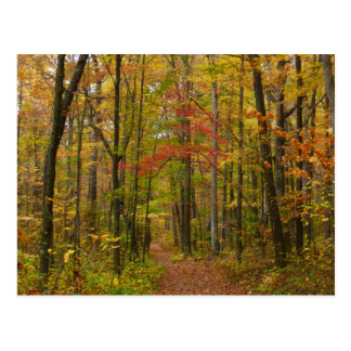 Laurel Hill State Park in Fall Postcard