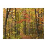 Laurel Hill Trail in Fall Canvas Print