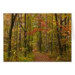 Laurel Hill Trail in Fall Card