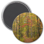 Laurel Hill Trail in Fall Magnet