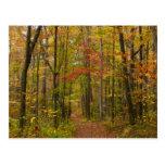 Laurel Hill Trail in Fall Postcard
