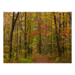 Laurel Hill Trail in Fall Poster