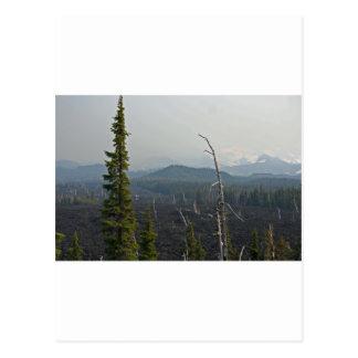 Lava Fields and panoramic at McKenzie Pass Oregon Postcard