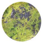 Lava Rock Moss Plate