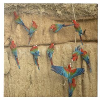 Lavabo de Perú, el río Amazonas, Madre de Dios Azulejo Cuadrado Grande