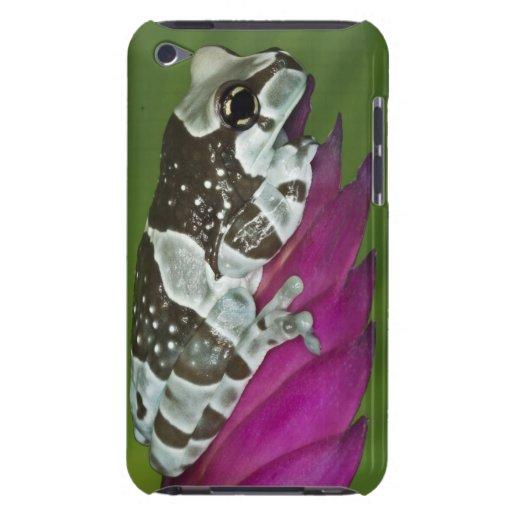 Lavabo de Suramérica, el Brasil, el Amazonas. Prim Case-Mate iPod Touch Fundas