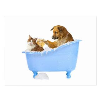 Lavado del gato postal