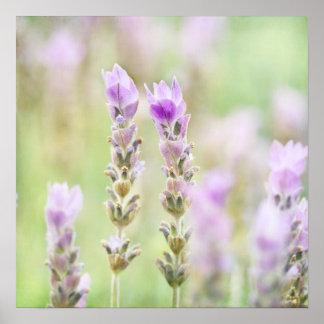 Lavanda de menta - decoración púrpura soñadora del póster