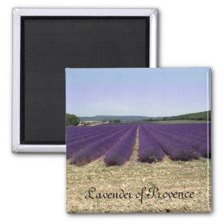 Lavanda de Provence Imán Cuadrado